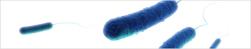 endotoxin-hdrimg